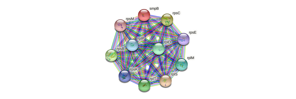 smpB protein (Idiomarina loihiensis) - STRING interaction network