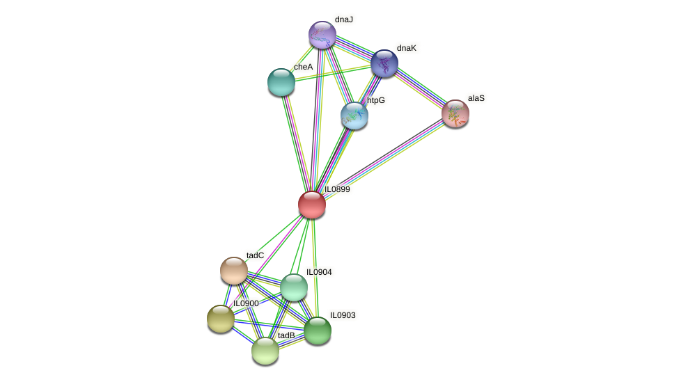 IL0899 protein (Idiomarina loihiensis) - STRING interaction network