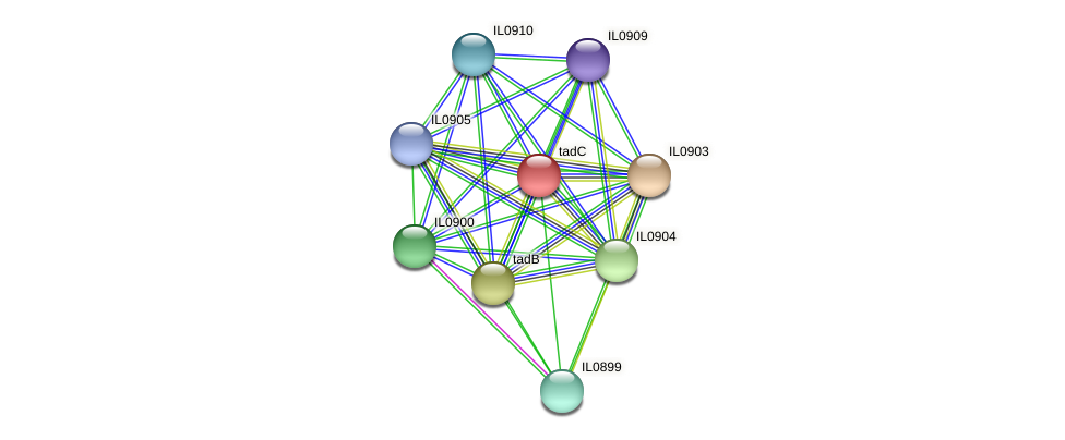 tadC protein (Idiomarina loihiensis) - STRING interaction network