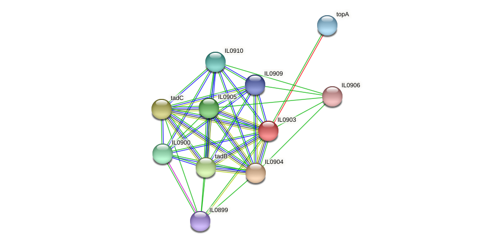 IL0903 protein (Idiomarina loihiensis) - STRING interaction network