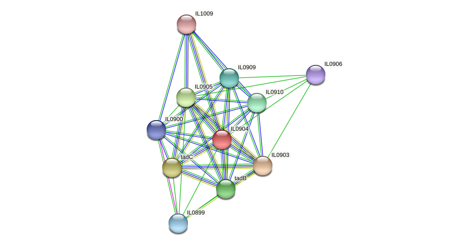 IL0904 protein (Idiomarina loihiensis) - STRING interaction network