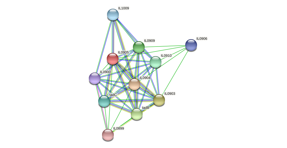 IL0905 protein (Idiomarina loihiensis) - STRING interaction network