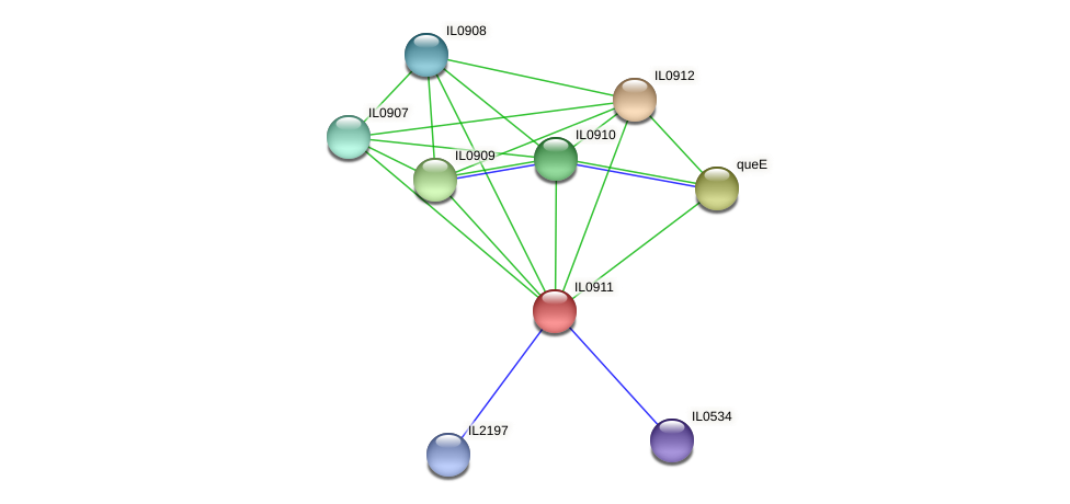 IL0911 protein (Idiomarina loihiensis) - STRING interaction network