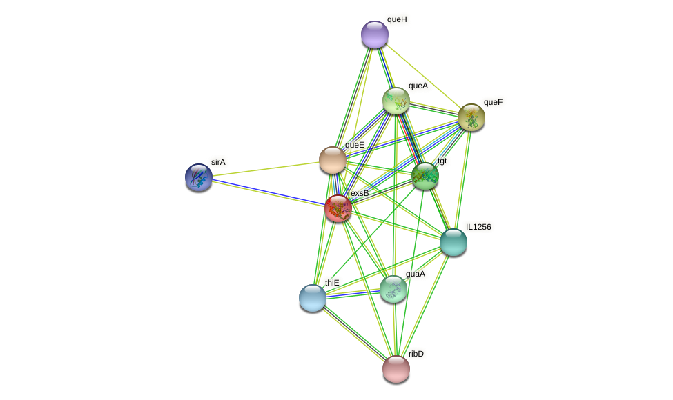 queC protein (Idiomarina loihiensis) - STRING interaction network