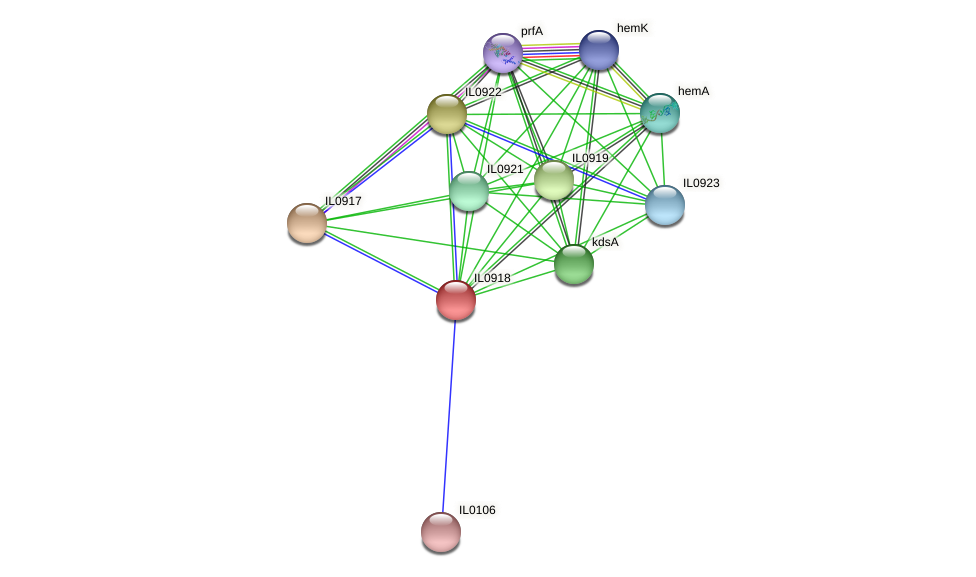 IL0918 protein (Idiomarina loihiensis) - STRING interaction network