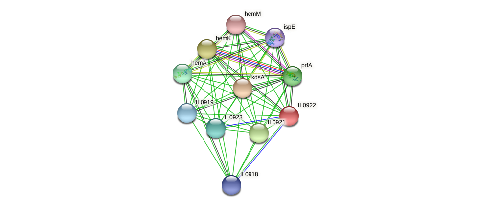 IL0922 protein (Idiomarina loihiensis) - STRING interaction network