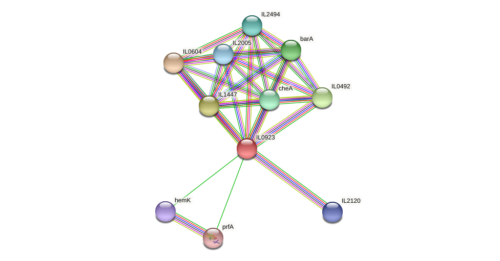 IL0923 protein (Idiomarina loihiensis) - STRING interaction network