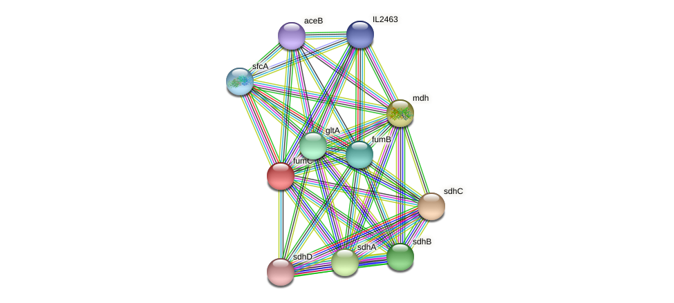 fumC protein (Idiomarina loihiensis) - STRING interaction network
