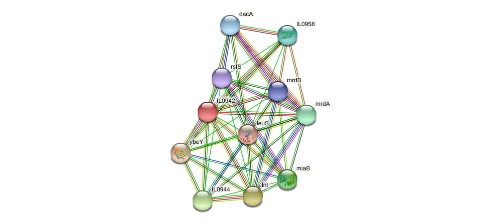 IL0942 protein (Idiomarina loihiensis) - STRING interaction network
