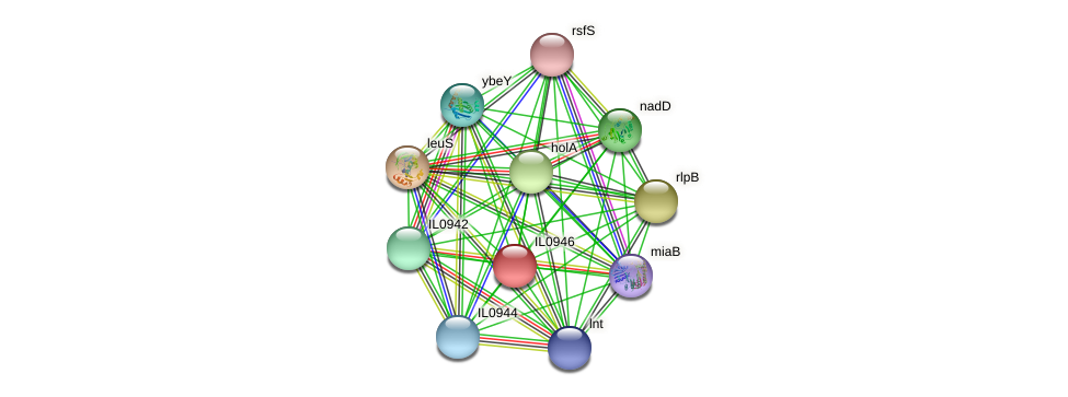 IL0946 protein (Idiomarina loihiensis) - STRING interaction network