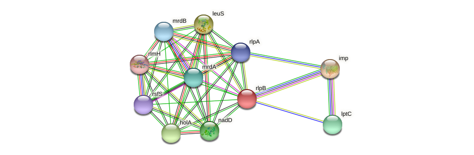 lptE protein (Idiomarina loihiensis) - STRING interaction network