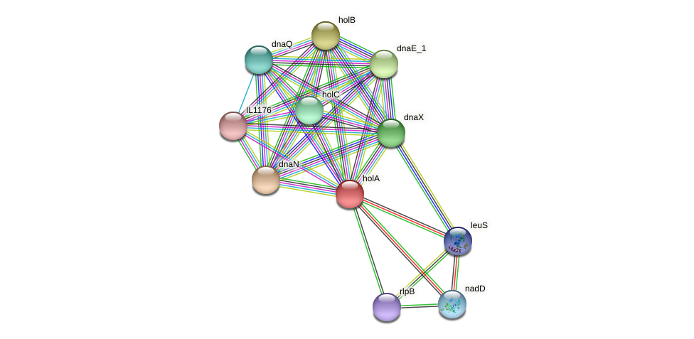 holA protein (Idiomarina loihiensis) - STRING interaction network