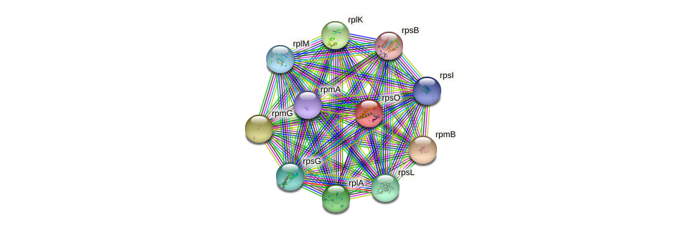 rpsO protein (Idiomarina loihiensis) - STRING interaction network