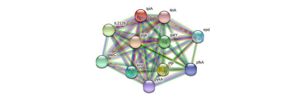tpiA protein (Idiomarina loihiensis) - STRING interaction network