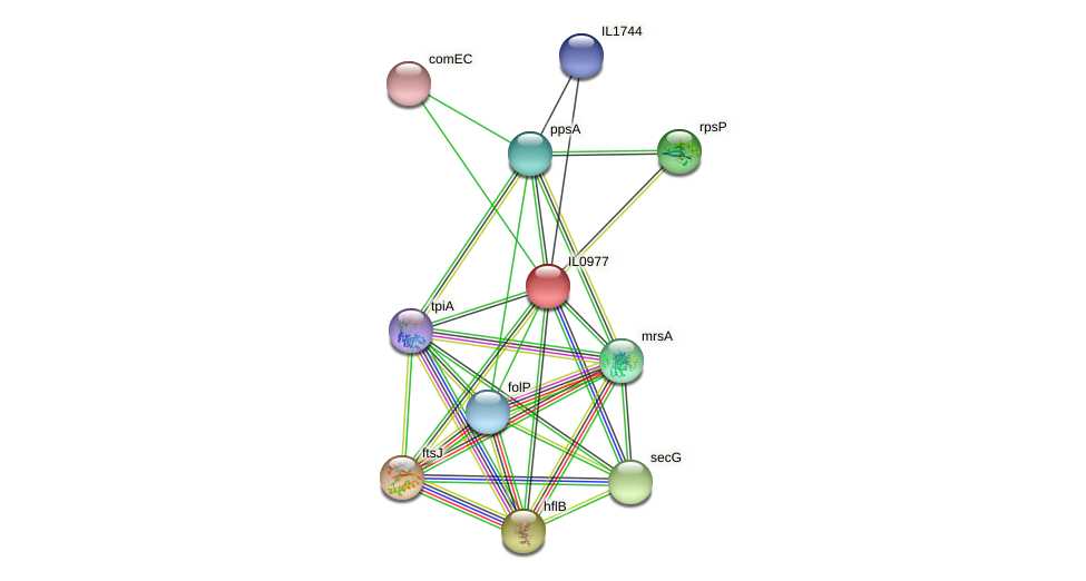 IL0977 protein (Idiomarina loihiensis) - STRING interaction network