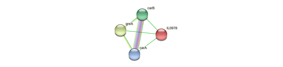 IL0978 protein (Idiomarina loihiensis) - STRING interaction network