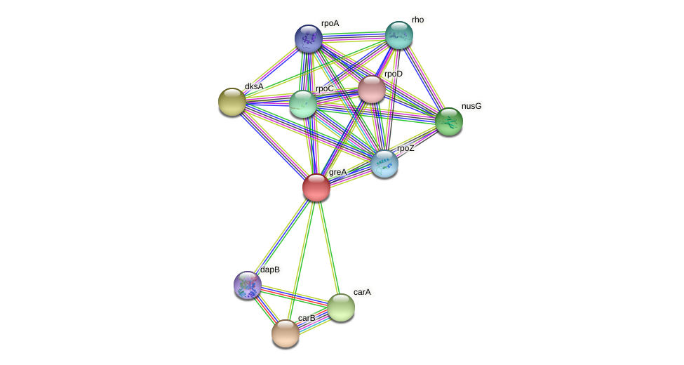 greA protein (Idiomarina loihiensis) - STRING interaction network