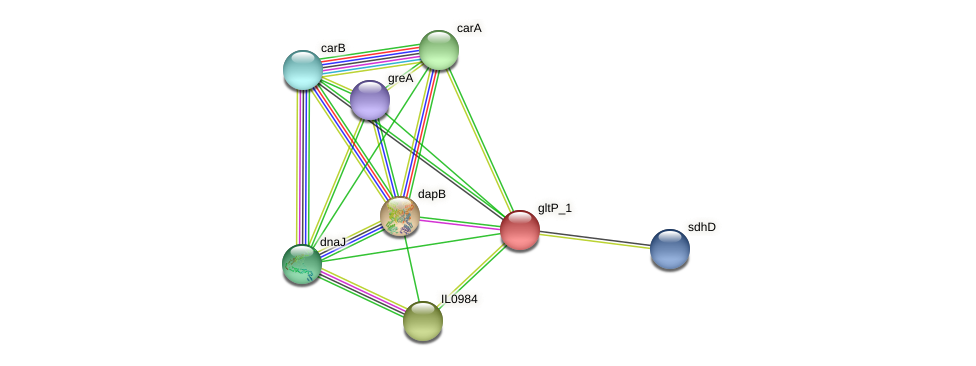 IL0983 protein (Idiomarina loihiensis) - STRING interaction network