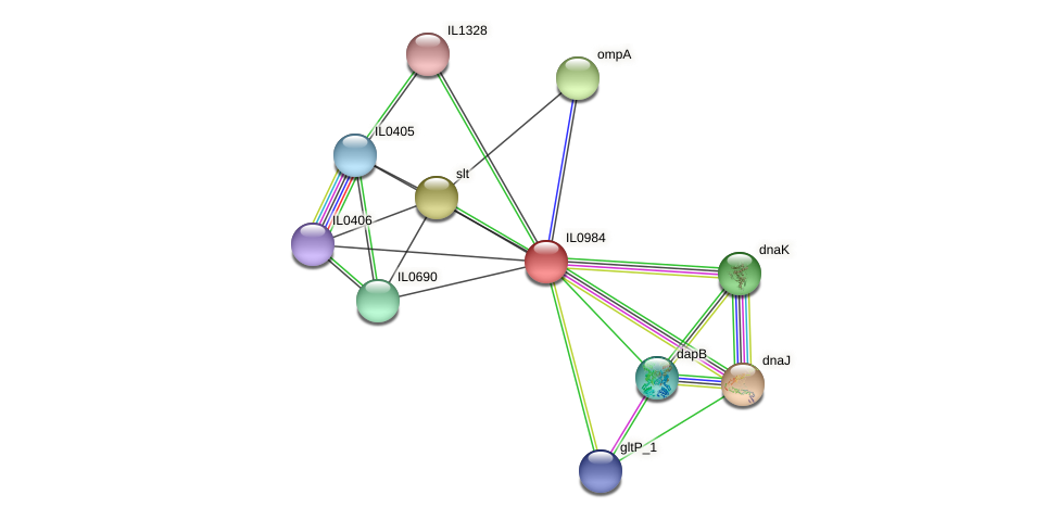 IL0984 protein (Idiomarina loihiensis) - STRING interaction network