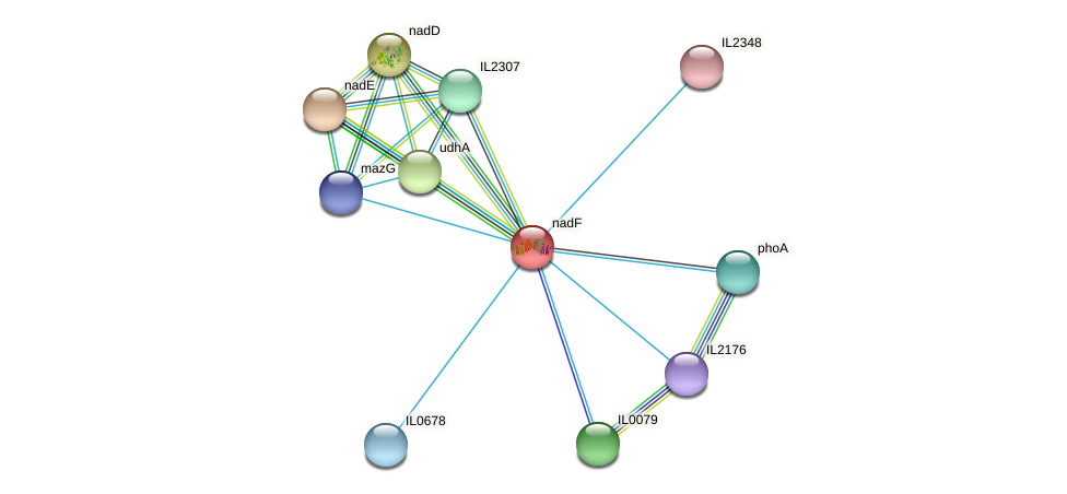 nadK protein (Idiomarina loihiensis) - STRING interaction network