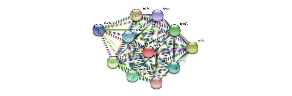 recN protein (Idiomarina loihiensis) - STRING interaction network