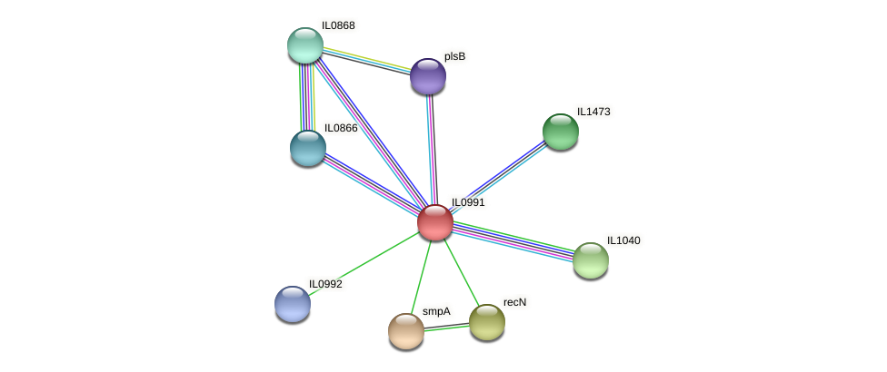IL0991 protein (Idiomarina loihiensis) - STRING interaction network