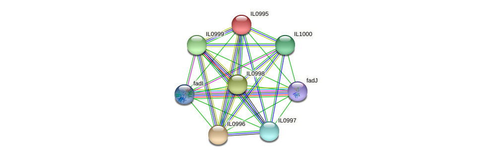 IL0995 protein (Idiomarina loihiensis) - STRING interaction network