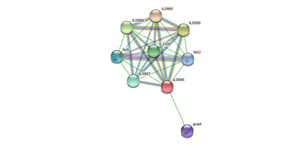 IL0996 protein (Idiomarina loihiensis) - STRING interaction network