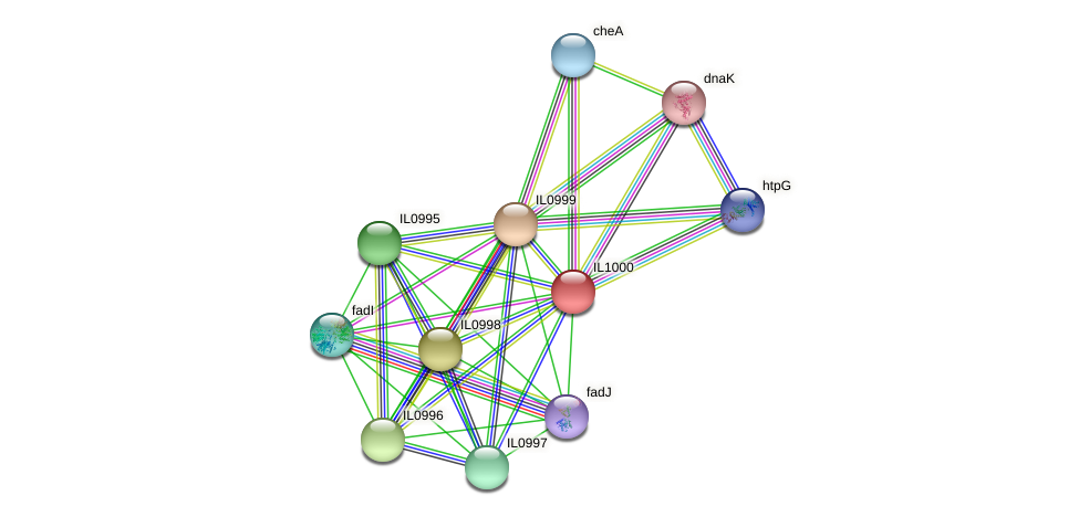 IL1000 protein (Idiomarina loihiensis) - STRING interaction network