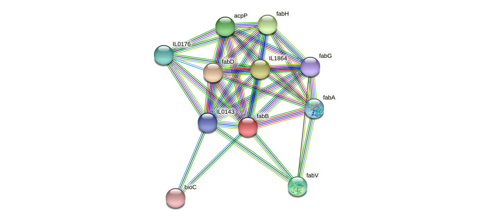 fabB protein (Idiomarina loihiensis) - STRING interaction network