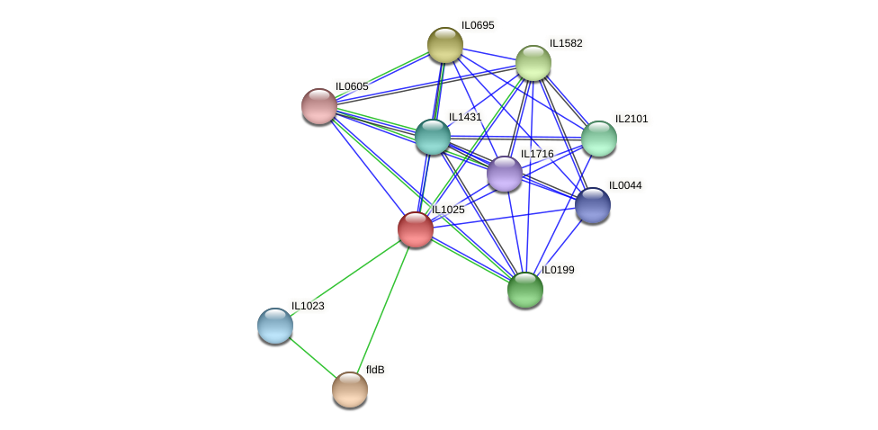 IL1025 protein (Idiomarina loihiensis) - STRING interaction network