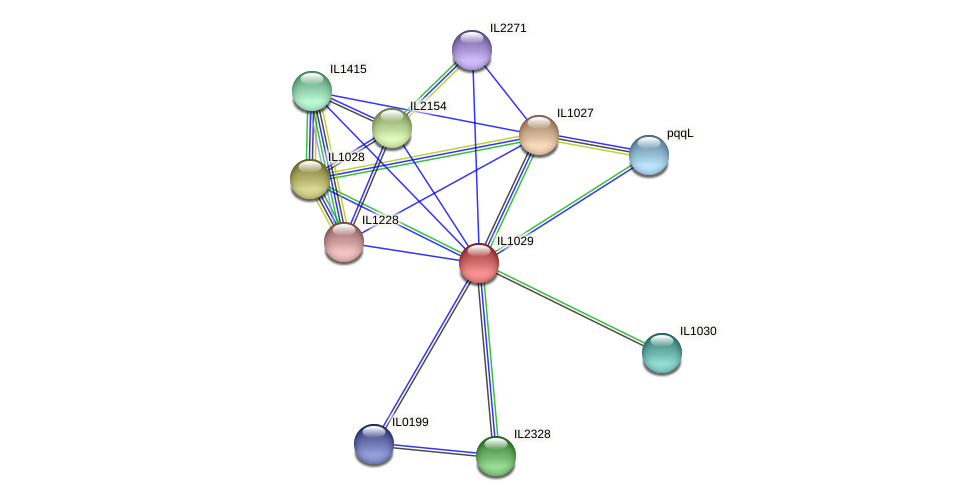 IL1029 protein (Idiomarina loihiensis) - STRING interaction network