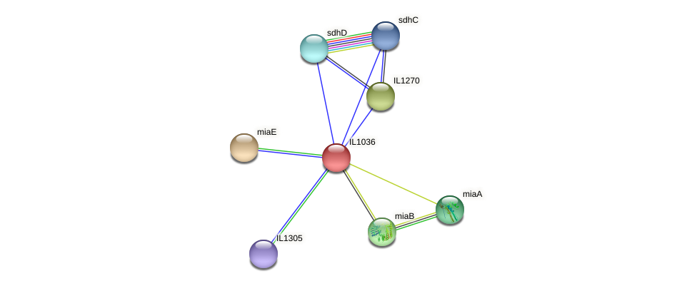 IL1036 protein (Idiomarina loihiensis) - STRING interaction network