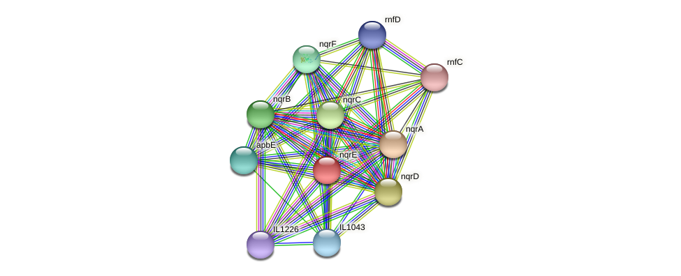 nqrE protein (Idiomarina loihiensis) - STRING interaction network
