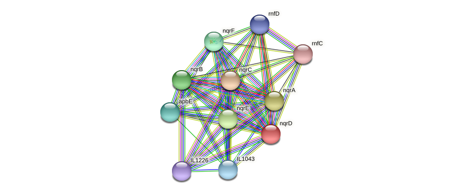 nqrD protein (Idiomarina loihiensis) - STRING interaction network