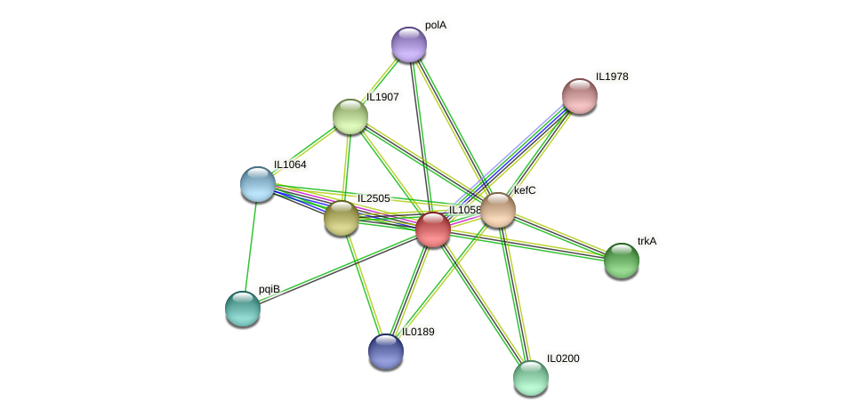 IL1058 protein (Idiomarina loihiensis) - STRING interaction network
