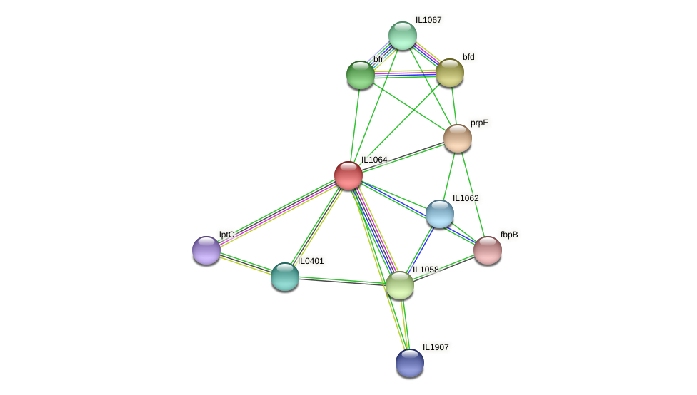 IL1064 protein (Idiomarina loihiensis) - STRING interaction network