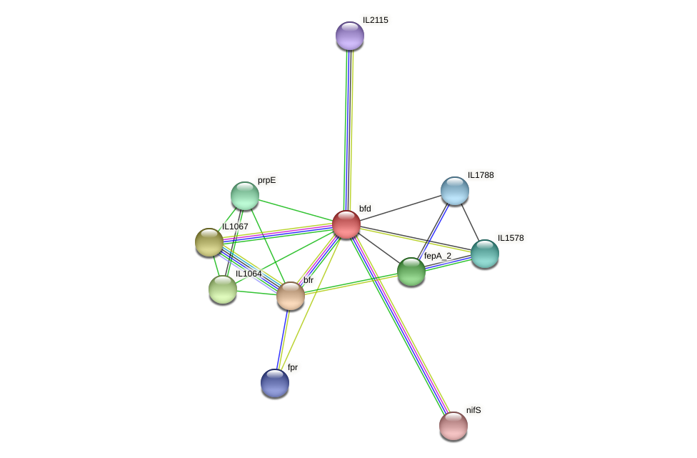 bfd protein (Idiomarina loihiensis) - STRING interaction network