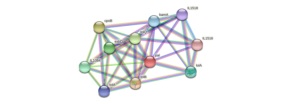 pal protein (Idiomarina loihiensis) - STRING interaction network
