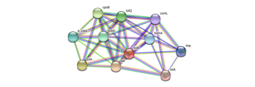 tolB protein (Idiomarina loihiensis) - STRING interaction network
