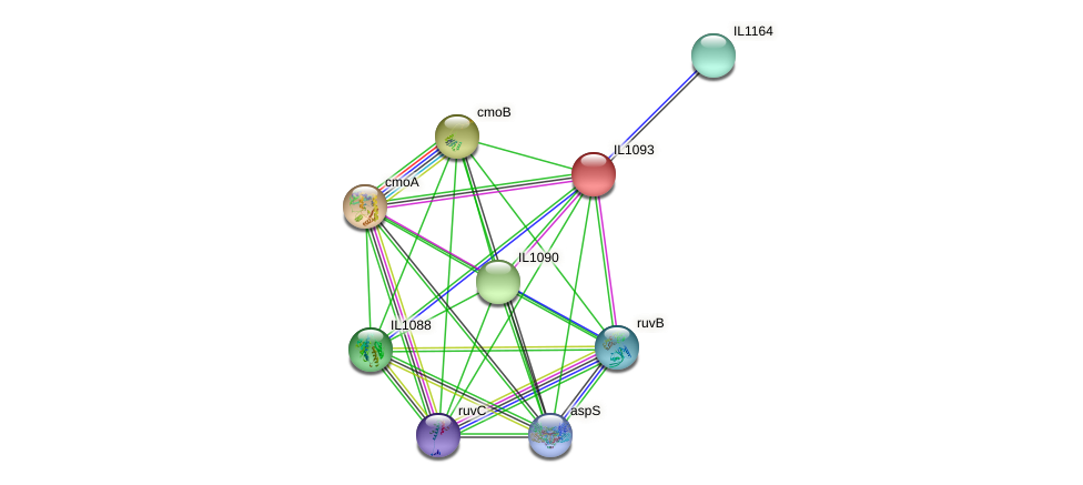 IL1093 protein (Idiomarina loihiensis) - STRING interaction network
