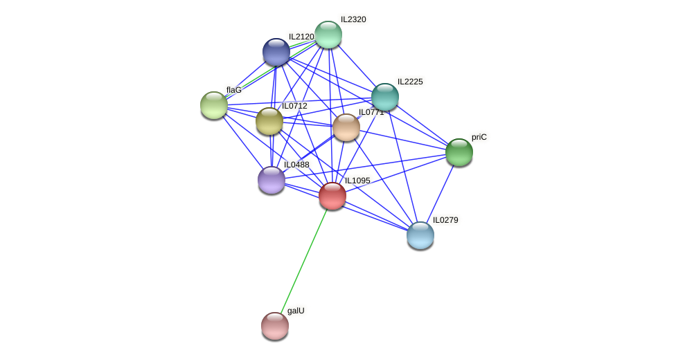 IL1095 protein (Idiomarina loihiensis) - STRING interaction network