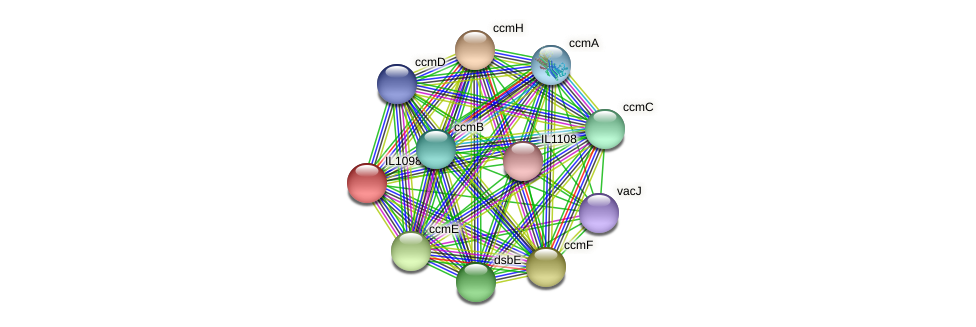 IL1098 protein (Idiomarina loihiensis) - STRING interaction network
