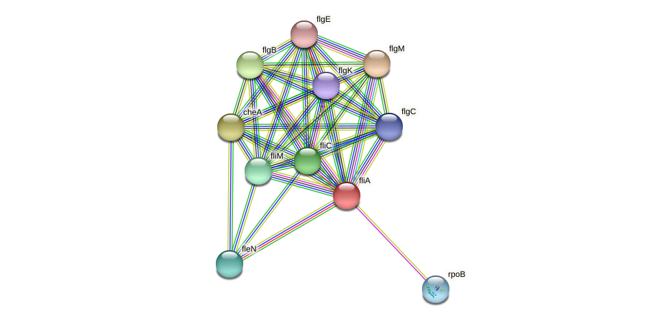 fliA protein (Idiomarina loihiensis) - STRING interaction network
