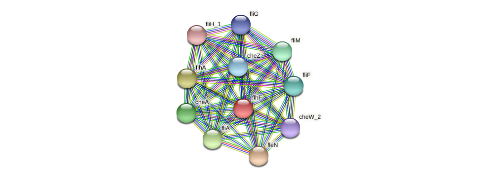 flhF protein (Idiomarina loihiensis) - STRING interaction network