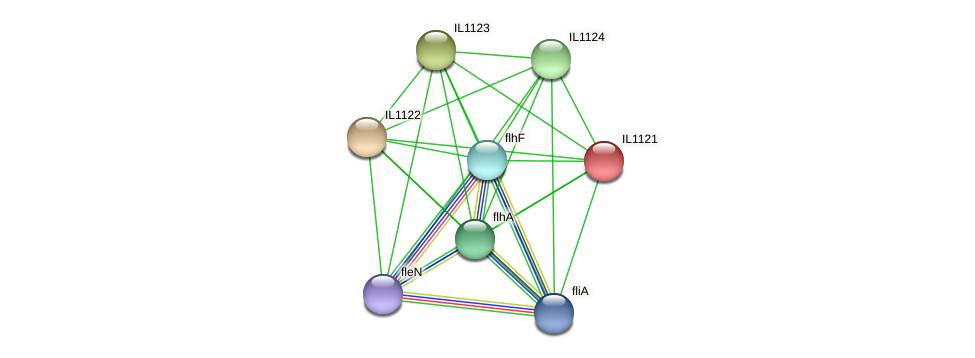 IL1121 protein (Idiomarina loihiensis) - STRING interaction network