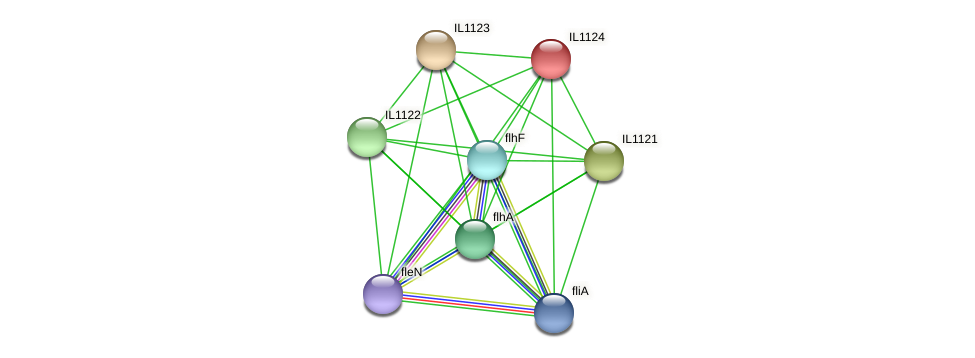 IL1124 protein (Idiomarina loihiensis) - STRING interaction network