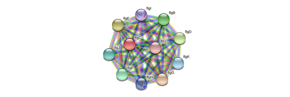 flgC protein (Idiomarina loihiensis) - STRING interaction network