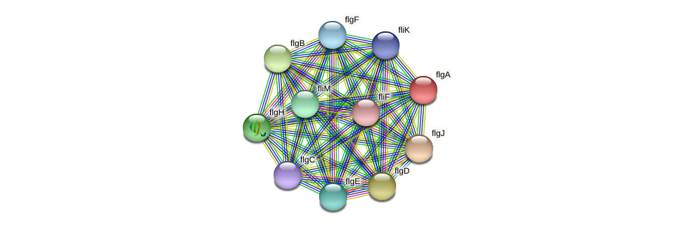 flgA protein (Idiomarina loihiensis) - STRING interaction network