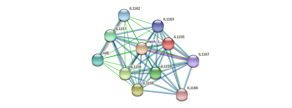 IL1155 protein (Idiomarina loihiensis) - STRING interaction network